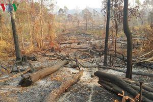 Biên phòng Gia Lai chỉ đạo xử lý nghiêm vụ phá rừng vành đai biên giới