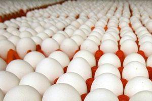 Hạn ngạch thuế quan nhập khẩu muối, trứng gia cầm năm 2019