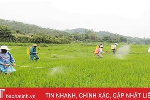Hà Tĩnh: 23.000 ha lúa xuân vào 'tầm ngắm' bệnh đạo ôn