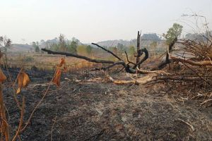 Vụ phá rừng vành đai biên giới ở Gia Lai: Hỏa tốc chỉ đạo điều tra