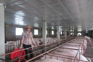 Ninh Bình tăng cường phòng, chống dịch tả lợn Châu Phi