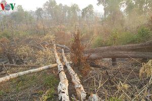 Vụ phá rừng biên giới Gia Lai: Cục Kiểm lâm trực tiếp vào thẩm tra