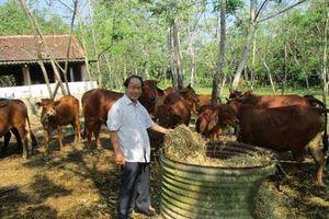 Quảng Nam: U70 và hành trình 30 năm gây dựng trang trại bạc tỷ