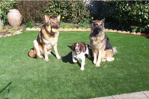 Cách làm sạch thảm cỏ nhân tạo