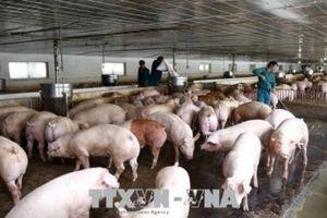 Thanh Hóa chấn chỉnh hoạt động của các chốt kiểm soát bệnh dịch tả lợn châu Phi