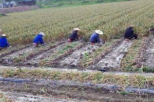Lao động bất hợp pháp tại Hàn Quốc (kỳ 2): Vây bắt và trốn chạy...