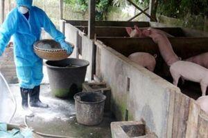 5 tuần có dịch tả lợn châu Phi, chợ heo lớn nhất miền Nam khởi sắc