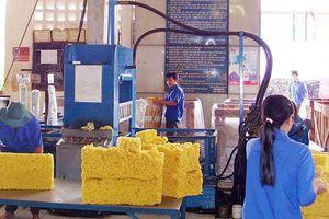 Xuất khẩu cao su của Việt Nam giảm mạnh trong tháng 2