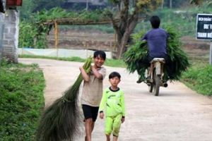 Lặn lội 'hái lộc rừng', không mất công trồng, kiếm trăm ngàn/ngày