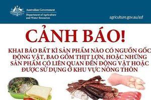 Mang cá chọi, ốc, tôm sống sang Australia - khách Việt bị thu giữ