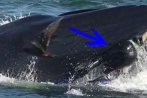 Lọt vào miệng cá voi khổng lồ, nhiếp ảnh gia thoát chết thần kỳ