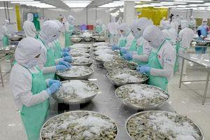 Anh là thị trường đáng lưu tâm của doanh nghiệp xuất khẩu tôm Việt Nam