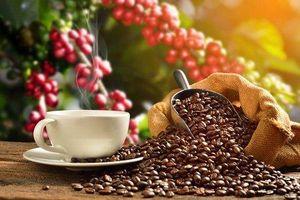 Giá cà phê hôm nay 13/3: Giảm nhẹ 100 đồng, thấp nhất 32.600 đồng/kg