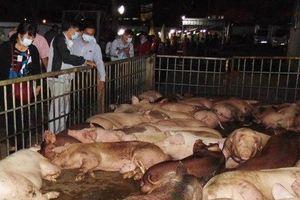 Sơn La xuất hiện dịch tả lợn Châu Phi ở huyện Thuận Châu