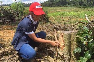 Có 'đánh khẽ' vụ phá rừng ở Bình Phước ?