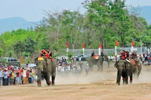 Mãn nhãn trận 'cầu đinh' giữa các 'cầu thủ' voi
