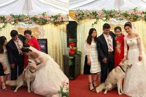 Nhìn cảnh 'cún cưng' quyến luyến không rời đòi chụp ảnh chung thế này, cô dâu sao nỡ về nhà chồng