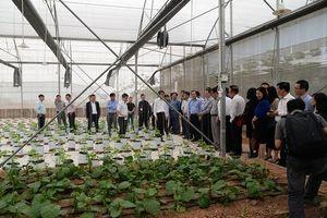 VNPT phát triển giải pháp IoT thông minh hỗ trợ Nông nghiệp