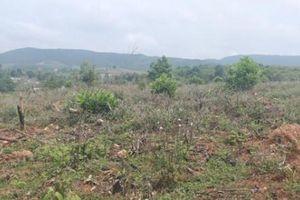 Nghệ An loay hoay xử lý vụ 10,3ha rừng phòng hộ bị san phẳng
