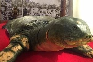 Lễ bàn giao tủ bảo quản trưng bày và mẫu vật rùa hồ Gươm
