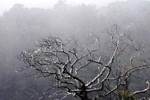 Vùng núi Bắc Bộ có nơi rét hại 9,4 độ C