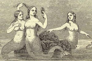 Chuyện lạ có thật về người cá chấn động thế kỷ 19