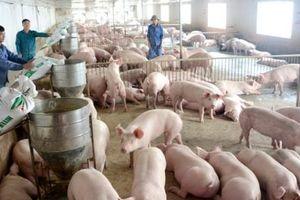 Giá lợn giảm, người chăn nuôi lao đaoBài 3: 'Chính sách có nhưng… Nhà nước ở quá xa'