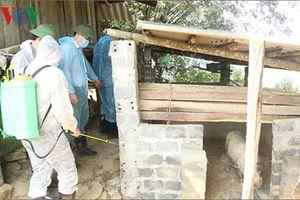 Sơn La phát hiện thêm ổ dịch tả lợn Châu Phi