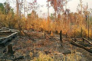Chuyển công an điều tra vụ phá gần 5 ha rừng để làm rẫy
