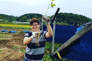 Quá trình trồng nhân sâm Hàn Quốc: Mất ít nhất 5 năm để thu hoạch