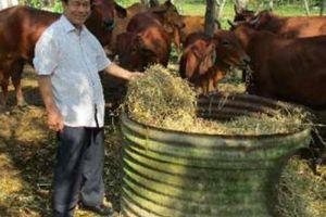 Ngưỡng mộ: 30 năm miệt mài gây dựng trang trại 'vàng', thu về 12 tỷ