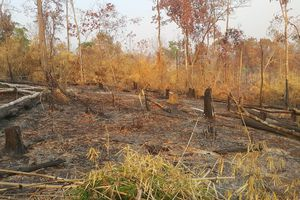 Khởi tố vụ phá gần 5ha rừng tại Gia Lai