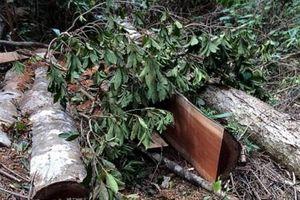 Khởi tố, bắt giam 5 đối tượng khai thác gỗ rừng trái phép