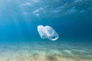 Phát hiện 40kg rác thải nhựa trong dạ dày cá voi chết ở Philippines