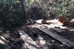 Gia Lai: Khai thác gỗ trái phép 5 đối tượng bị khởi tố, bắt tạm giam