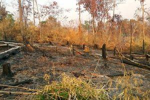 Khởi tố vụ án phá gần 5ha rừng làm rẫy
