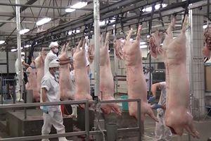 Đảm bảo nguồn thịt lợn an toàn cho người đân TP. Hồ Chí Minh