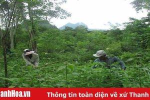 Thực hiện chính sách chi trả dịch vụ môi trường rừng trên địa bàn tỉnh