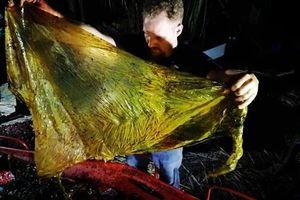 40kg nhựa trong dạ dày cá voi chết ở Philippines
