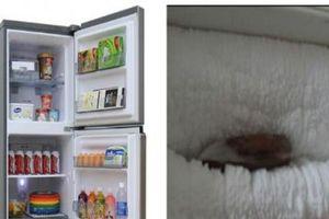 Tủ lạnh bị đóng tuyết gây tốn điện và dễ hư hỏng, cách khắc phục đơn giản