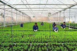 Vay vốn ngân hàng: Điểm nghẽn và giải pháp với doanh nghiệp nông nghiệp