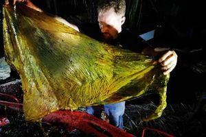 Tìm thấy 40kg túi nylon trong xác cá voi