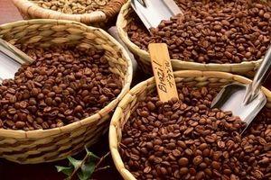 Giá cà phê hôm nay 19/3: Tiếp tục giảm 100 đồng/kg, về mức 31.800 đồng/kg