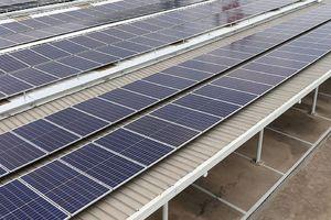 Nhà đầu tư Anh hào hứng với lĩnh vực năng lượng tái tạo