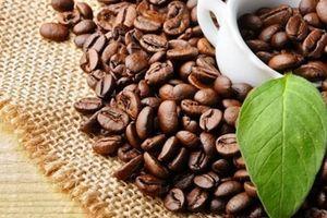 Phát triển cà phê đặc sản, nâng cao giá trị hạt cà phê Việt Nam