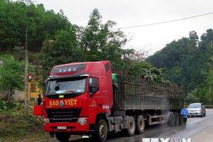 Lập chốt kiểm soát vận chuyển lợn trên tuyến quốc lộ 1A