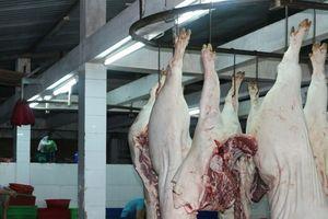 Xử phạt các đối tượng tung tin thất thiệt về sán lợn gây hoang mang dư luận