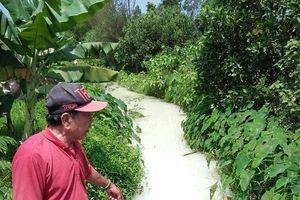 Đà Nẵng: Mương nước đổi màu màu bất thường, bốc mùi hôi thối