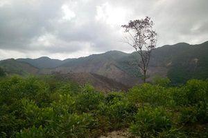Quảng Bình: Tăng cường các biện pháp bảo vệ rừng, quản lý đất lâm nghiệp và PCCC rừng