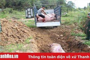 Triển khai các biện pháp cấp bách để khống chế, ngăn chặn bệnh Dịch tả lợn Châu Phi